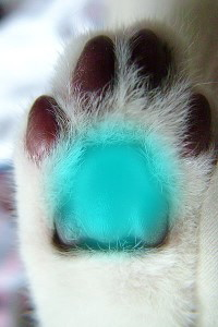 Cat paw showing Bud Chakra