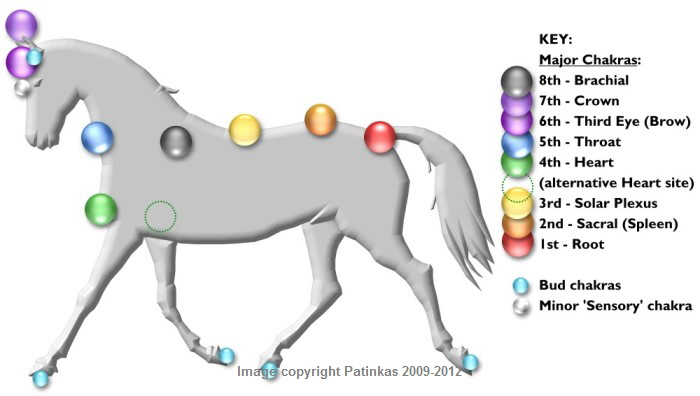 http://www.patinkas.co.uk/Chakra_System_of_Animals/a_Horse_Chakras_Pic.jpg